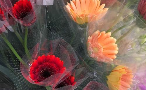 3.【母の日ギフトにおすすめの花】ガーベラ