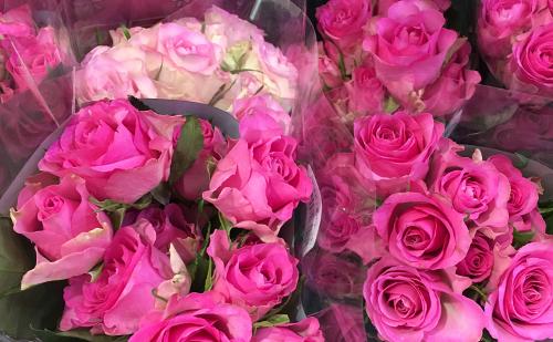 1.【母の日ギフトにおすすめの花】バラ