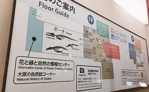 【大阪市立自然史博物館】恐竜の化石を子連れで見る!内部案内