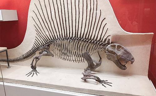 子連れでのお出かけ先に大阪市立自然史博物館を選んだ理由!