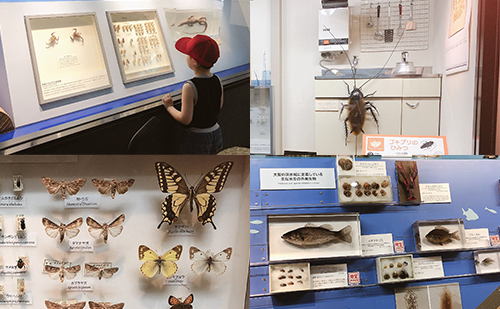 第1展示室 身近な自然(昆虫など身近な生き物の生活)