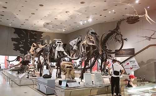 第2展示室 地球と生命の歴史(恐竜の化石はココ)