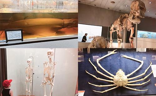 第3展示室 生命の進化(人間や動物などの骨やくらしなど)