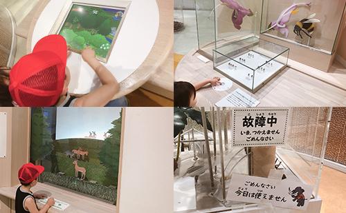 第5展示室 生き物のくらし(ゲームなどの体験型)