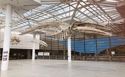 クジラの骨の標本が出迎えてくれる(巨大なクジラの骨が3体!)